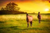 Konie na polanie w tle zachodzącego słońca