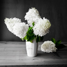 Bouquet Of White Hydrangea Flowers On A Dark Grunge Background.