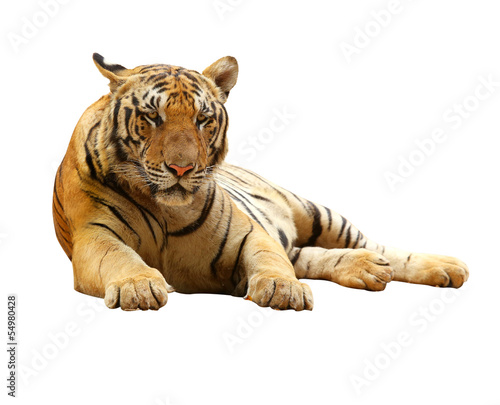 Tiger with clupping path Canvas Print
