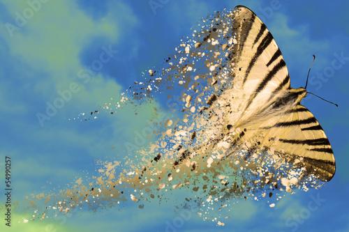 Photo farfalla in frantumi
