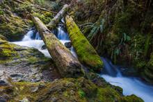 Waterfall Under Tree Fall