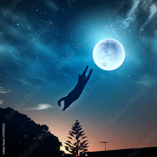 Poster Volle maan Cat catching moon