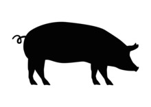 Schwein Silhouette
