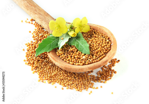 Photo Stands Herbs 2 Mustard seeds in wooden spoon with mustard flower isolated