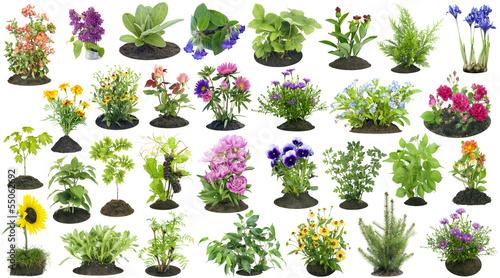 Garden plants grow in soil set Tapéta, Fotótapéta