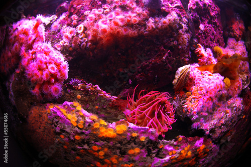Underwater photo of colorful sea anemone and corals