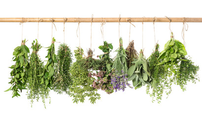 Panel Szklanyvarios fresh herbs hanging isolated on white