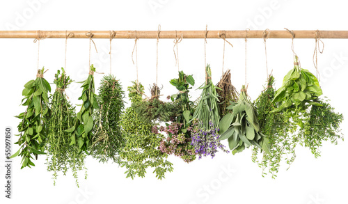 Photo  varios fresh herbs hanging isolated on white