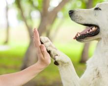 Give Me Five - Dog Pressing Hi...