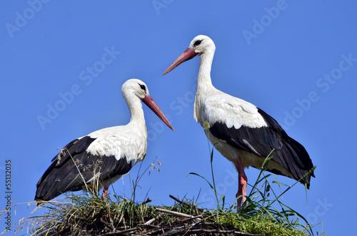 Naklejki Bocian  storks-in-the-nest