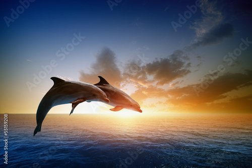 Canvas Print Dolphins jumping