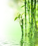 Fototapeta  - bamboo stalks on water
