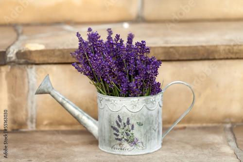 Fototapeta Watering Can and Lavender isolated on white obraz na płótnie