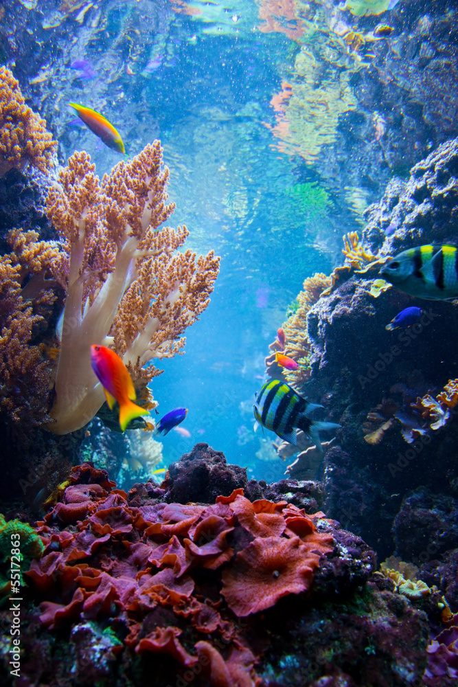 Fototapeta Underwater scene with fish, coral reef