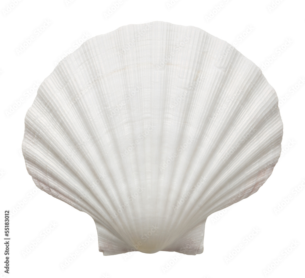 Fotografie, Obraz Close up of ocean shell isolated on white background