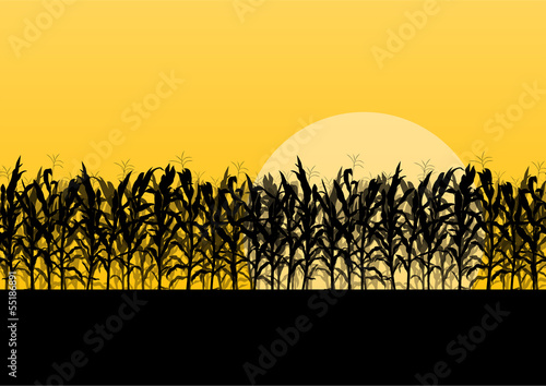 Vászonkép Corn field detailed countryside landscape illustration backgroun