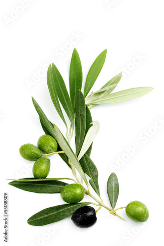 Spoed Foto op Canvas Olijfboom Ramo di ulivo con foglie e olive