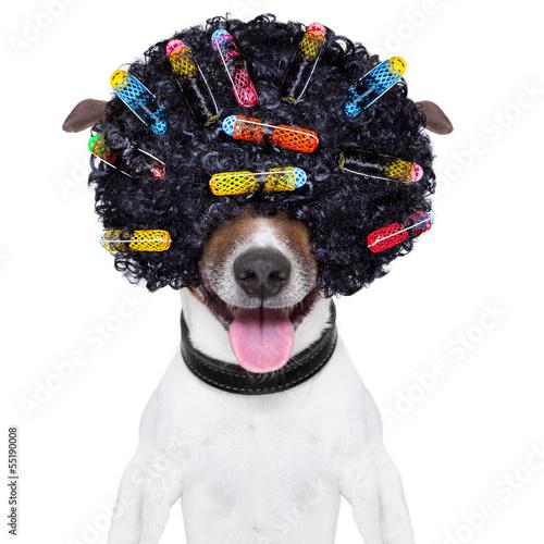Verrückter Hund mit lockigem Haar Fototapete
