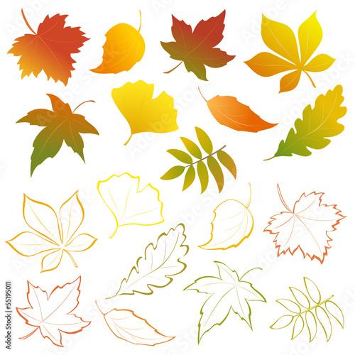 Obraz Falling leaves set - fototapety do salonu