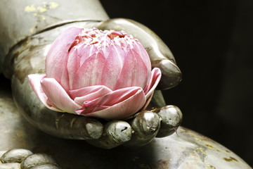 ružičasti lotos u ruci Bude