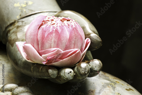 Photographie pink lotus in hand of buddha