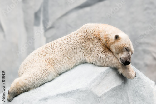 Poster Ijsbeer Sleeping polar bear