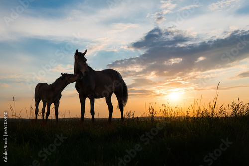 Canvas-taulu two horses at sunset
