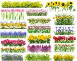 Fototapeta Tulipany - Summer flowers borders set