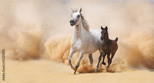 Fotografie, Obraz  Arabian Mare and foal galloping in desert