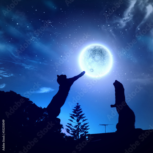 Poster Pleine lune Silhouettes of animals in night sky