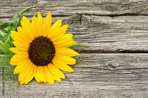 Obrazy wieloczęściowe słonecznik na drewnianym tle