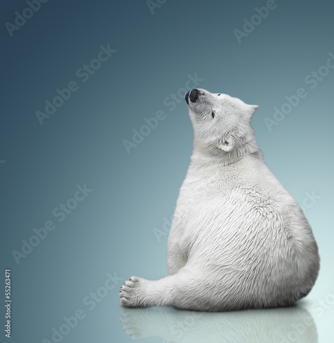 Spoed Fotobehang Ijsbeer small polar bear cub