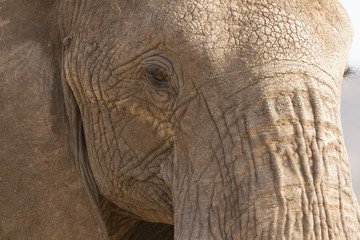 Panel Szklany Słoń Portrait of african elephant