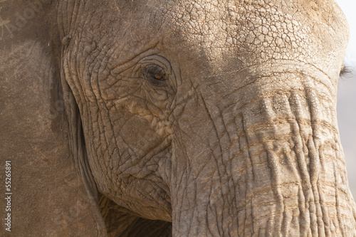 Portrait of african elephant - 55265891