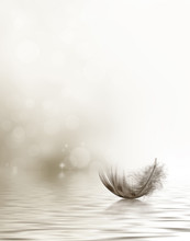 Drifting Feather Condolence Or Sympathy Card In Black And White