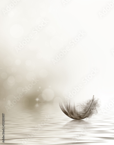 Fotografie, Obraz  Condolence or sympathy design with a feather drifting on water