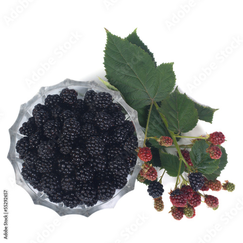 Ripe dewberry in a bowl and a branch with berries Slika na platnu