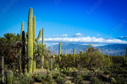 Canvas Prints Arizona Desert Scape