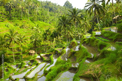 Foto auf Leinwand Indonesien Rice terrace