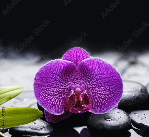 Poster Spa Beautiful orchid with palm leaf on pebbles