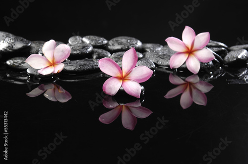 Still life with three frangipani and black pebbles