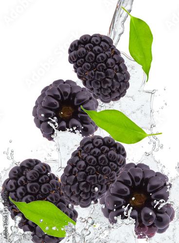 fresh blackberry in water splash