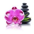 Orchidee mit Kieselsteinen