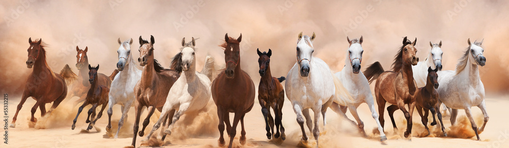 Fototapety, obrazy: A herd of horses running on the sand storm