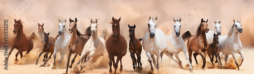Poster Paarden A herd of horses running on the sand storm