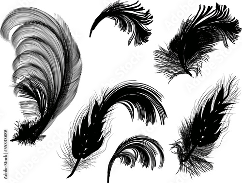 six black fluffy feathers isolated on white