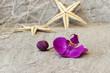 Seestern mit Orchidee