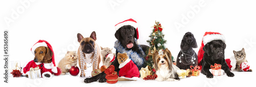 Poster Chien dog and cat and kitens wearing a santa hat