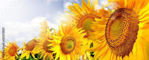 kwiaty - 55375857