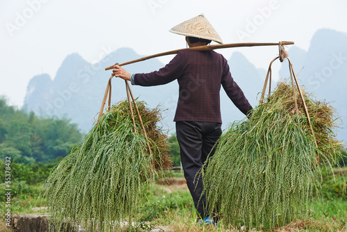 Photo  chinese agricultural farm worker
